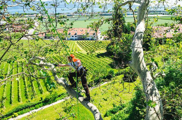 Immagine per la categoria Treeclimbing e DPI